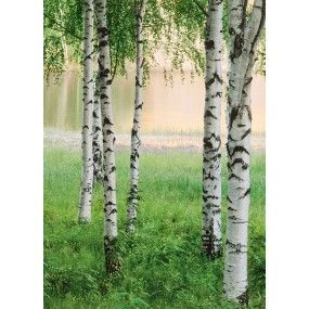 Nordic Forest Wall Mural-290