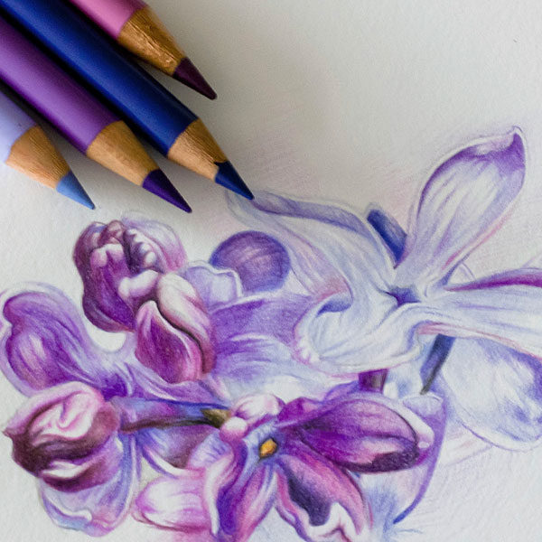 Faber-Castell-POLYCHROMOS-Artist-Color-Pencils-sketch-of-flowers