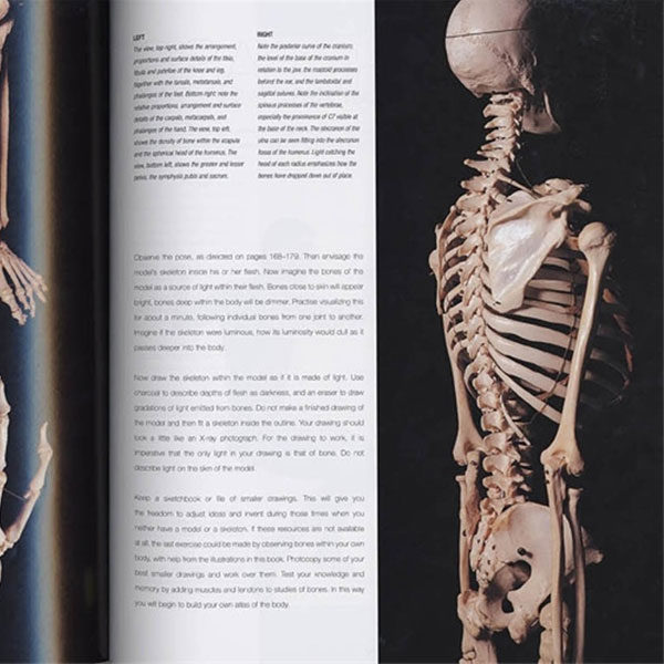 anatomy-for-the-artist-dk-books-inside-view-2