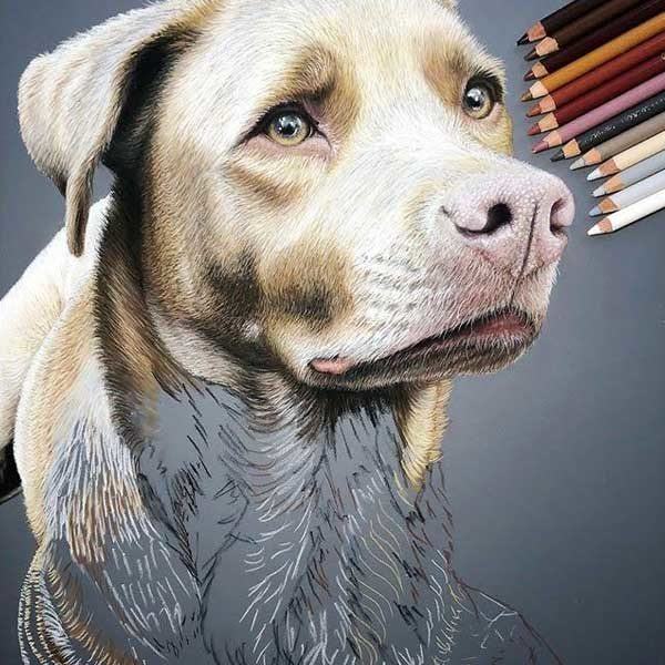 Stabilo-CarbOthello-Pastel-Pencils-Sketch-of-a-dog-with-a-sad-face
