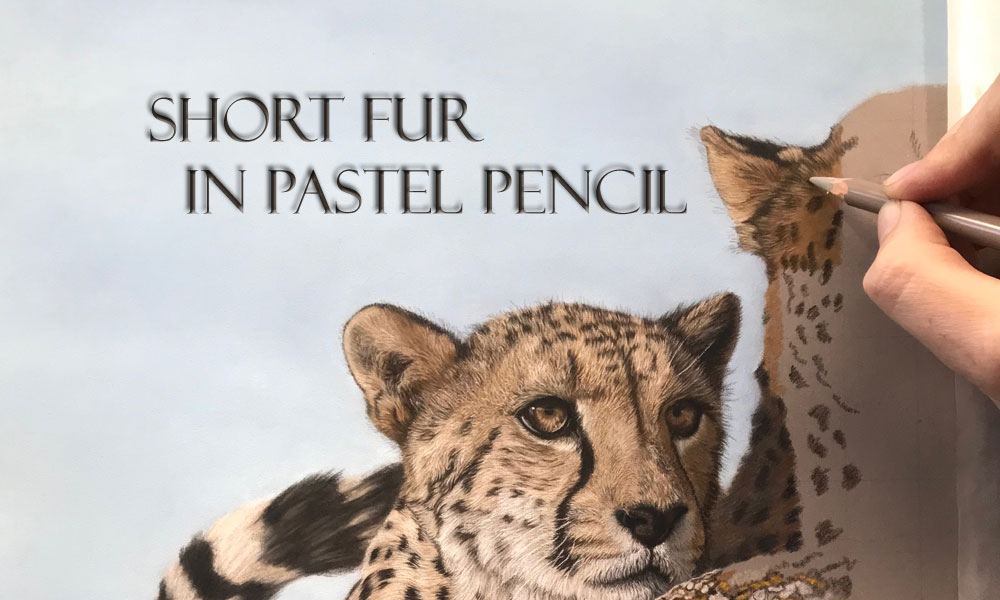 Fight the Fur-Fear: Tips for Short Fur in Pastel Pencil