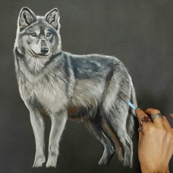 Panpastel-Sketch-by-Lisa-Ann-Watkins-of-a-wolve