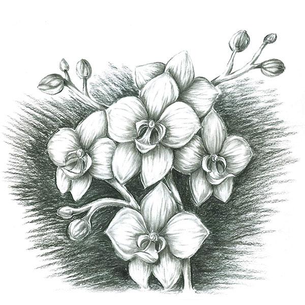 Mars-Lumograph-charcoal-100C-Pencils-Flower-Sketch